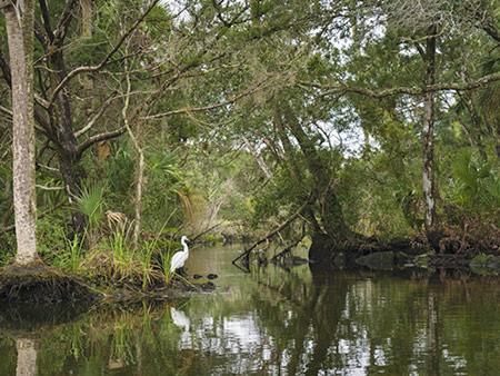 Chassahowitzka National Wildlife Refuge